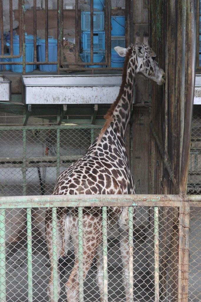 Sapporo Maruyama Zoo (10)