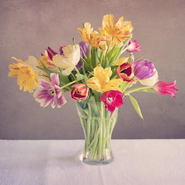 Spring Square Tulips