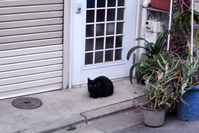 Today's Cat@2011-03-11