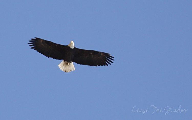 03-11-eagles