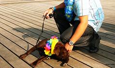 Leica Fun (Seaton Carew.) Tags: leica digilux2 doginabag overmyshoulder mynewdog seatonpick myfirstseasidetrip imallfloweredup littlebitoffuss