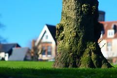 Lipson Park (osowska.marta) Tags: green grass spring pentax united plymouth kingdom devon trunk lipson k100d