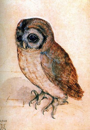 durer's little owl