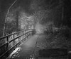 Nameless Walk (BoboftheGlen) Tags: trees woodland scotland woods walk renfrewshire uplawmoor