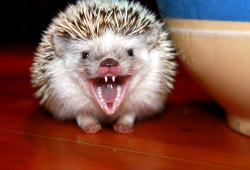 Image result for evil hedgehog