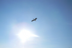 "DSCN0069 ""In love's war, he who flieth is conqueror."" (pinktigger) Tags: blue sky italy bird nature fly italia stork friuli fagagna cicogna oasideiquadris feagne"