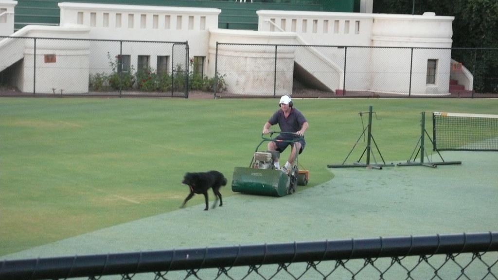 Lawn mower dog