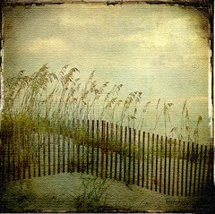 ANOTHER SOUTHERN BREEZE (kluthphotos) Tags: sky white texture beach gulfofmexico nature water sand gulf shoreline textures whitesand seaoats orangebeachal whitesandybeach dragondaggerphoto dragondaggeraward skeletalmess skeletalmesstextures magicunicornverybest selectbestfavorites selectbestexcellence magicunicornmasterpiece trolledproud sbfmasterpiece shadowhousecreations kluthphotos