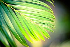 Journey to Midway Island (Kris Krug) Tags: island pacific south documentary plastic pollution midway atoll midwayatoll midwayisland plasticpollution papahanaumokuakea papahānaumokuākea midwayjourney