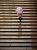 A Rainy Day at Bethesda (CVerwaal) Tags: nyc newyorkcity newyork stairs centralpark steps ishootfilm oldschool umbrellas olympustrip35 fujisuperia bethesdaterrace