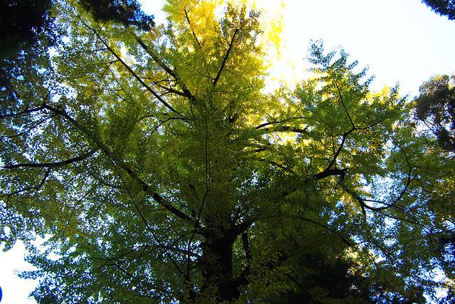 20101119_090934_石上神社