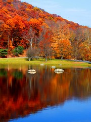 The Rocks in Autumn (Stanley Zimny) Tags: park autumn trees red orange lake reflection tree fall nature colors leaves rock automne catchycolors leaf colorful colours seasons natural fallcolors herbst autumncolors fourseasons autunno autumnal colorexplosion 4seasons otono sgis ahorn jesien jesiennie 100commentgroup