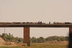 West Africa-4805