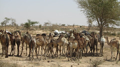 West Africa-2500