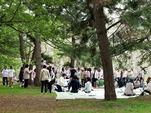一堆人在樹下賞櫻,玩遊戲