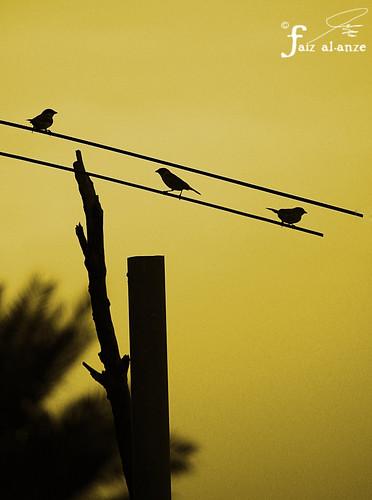 علمتني العصافير الحرية، للخيال عصافير 5582769243_f49f751c9