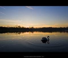 Swooni lake (Filip Meutermans) Tags: lake nature swan nikon meer mechelen malines d700 nocanon filipmeutermans