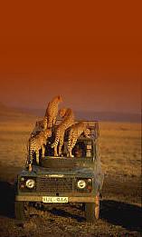 Kenya National Parks Safari tour Operator, Africa National Game Parks, Game Reserves, Game Sanctuaries Safari tour Operator