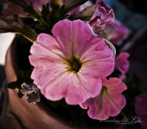 SpringFlowers_15