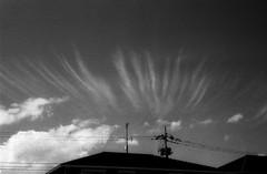 (grasping) (Dinasty_Oomae) Tags: leica leicaiiia leica3a  iiia 3a   blackandwhite blackwhite monochrome bw outdoor   chiba  nagareyama  cloud  utilitywire wire  utilitypole