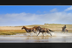 Rush (Albert Photo) Tags: innermongolia china horses gallop spur groom housekeeper ride run speed flee runaway power wild free outdoor photoborder