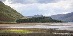 _MG_5011 (Flyfifer Photography) Tags: greatbritain highland invernessshire knoydart places scotland unitedkingdom