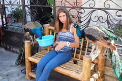 Bird watchingof the feathered as well as the non-feathered kind (shankar s.) Tags: gori georgia formerrussianterritory historicbuildings unescoworldheritagesite oldtownship historicsettlement mtskheta heritagebuildings oldtenements traditionalgeorgiancrafts peafowl peacock display localmtskhetaresident georgianwoman feedingthebirds