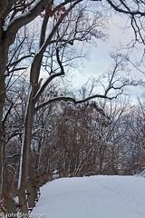 IMG_4103.jpg (jstritz) Tags: winter trail fhsp