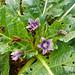 Historias 'Zona Cero':La Botanica Brujeril.Jesus Callejo,18/09/2011