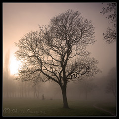 Square one..... (Chrisconphoto) Tags: park trees sunset mist dogs fog square victoria walker sthelens chrisconway goodlight