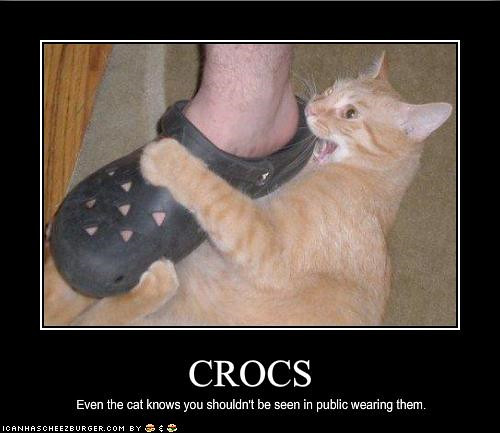 Crocs even the cat knows