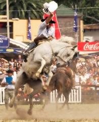 El tordillo cabortero (Eduardo Amorim) Tags: horses horse southamerica caballo uruguay cheval caballos cavalos prado montevideo pferde cavalli cavallo cavalo gauchos pferd hest hevonen chevaux gaucho  amricadosul montevidu hst uruguai gacho  amriquedusud  gachos  sudamrica suramrica amricadelsur  sdamerika jineteada   americadelsud gineteada  americameridionale semanacriolla semanacriolladelprado eduardoamorim iayayam yamaiay semanacriolladelprado2010