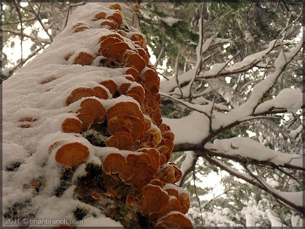 P1130894_tree