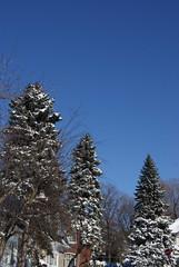 After the Storm (susanvg) Tags: snow blueskies dailyshoot ds445