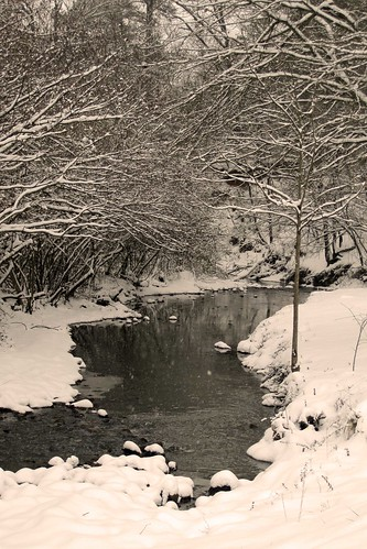 February Snow 4