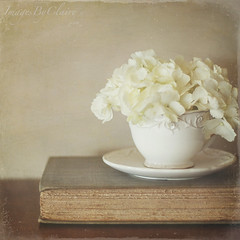 A cup of cream.... (ImagesByClaire) Tags: old flowers stilllife vintage book petals antique textures hydrangea teacup creamy florabella skeletalmess lesbrumes