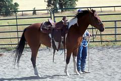 100_3688 (obsidianmoonranch) Tags: horses horse horsebackriding friesian parelli horsemanship naturalhorsemanship parelliclinic marcrea