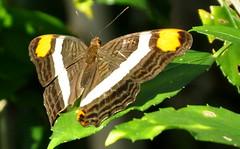 Butterfly Bokeh (rpennington9) Tags: macro chattanooga nature butterfly insect nikon bokeh tennessee bugs tennesseeaquarium nikond90 photosandcalendar natureselegantshots butterfliesexhibit