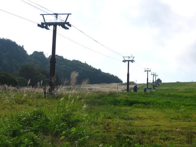 電柱が連なる景色のフリー写真素材