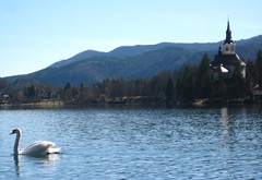 white swan (jorge f2.8) Tags: eslovenia lagodebled