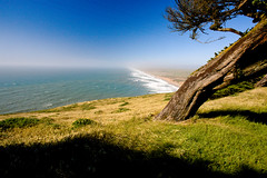 Point Reyes - California (Jackpicks) Tags: california tree me flickr explore pacificocean windswept pointreyes diamondclassphotographer flickrdiamond platinumheartaward flickrexploreme mygearandme mygearandmepremium californiacoastalimages gpsetest