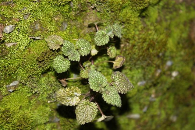 yosunlu güzellik