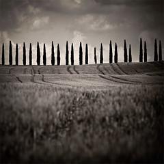 (IrenaS) Tags: trees blackandwhite italy monochrome landscape row tuscany dreamy cypress wwwirenesuchockicom