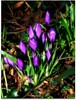 A Promise of spring. (♥ Katie ann. Off more than on.) Tags: naturesfinest flickrsfantasticflowers excellentsflowers handselectedphotographs