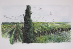 (Hava Matzkin Eilam Art) Tags: trees art nature ink vineyard drawing air cypress portfolio  hava eilam   matzkin