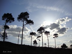 Pines & clouds in Spring, Canford Heath (brightondj - getting the most from a cheap compact) Tags: picnik uk dorset sonydscw210 davejones compact £100camera pointandshoot landscape landscapes outdoors scenery countryside landscapeandseascape outandabout thosepines