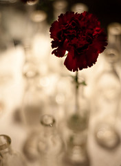 remind me (nardell) Tags: red terrain flower store bottles display glassbottles singleflowers terrainatstyers