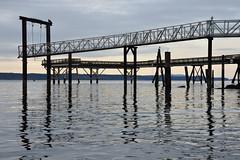 (StephenZacharias) Tags: ocean sea reflection pier seagull vancouverisland ripples sidney 9600