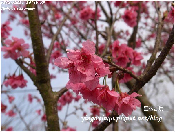 雲林古坑_20110227_R0018285