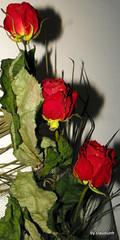 In numele trandafirului (2) by claudiunh